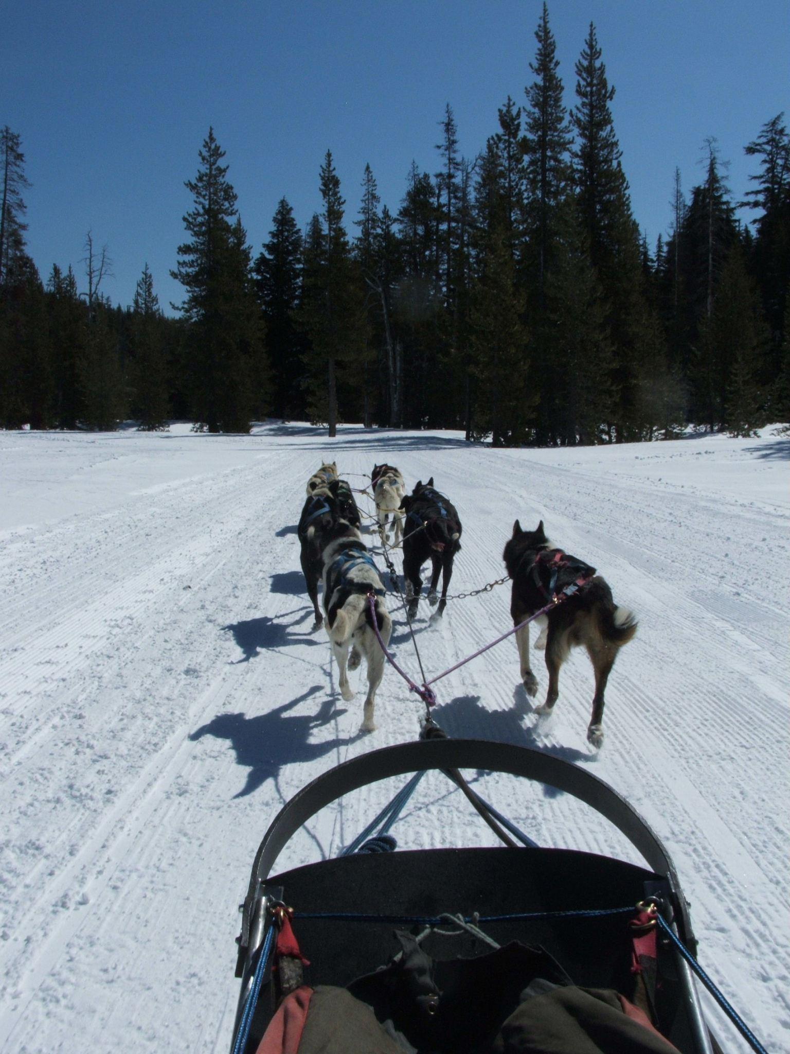 dog-sled-ride