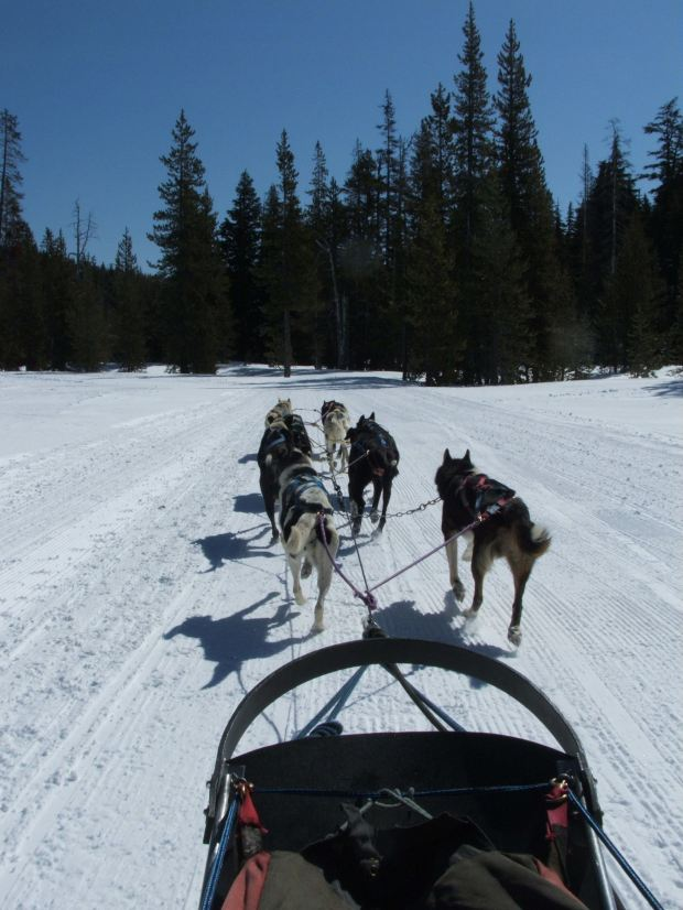 dog-sled-ride